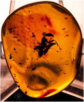 'Amber cricket...'
