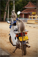 'Stop monkeying around with my bike'