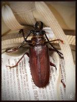 'big bug'