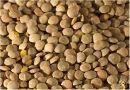 'Sea of lentils...'