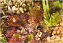 'Coral garden..?