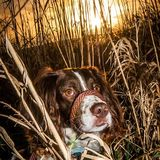 sunset springer