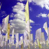 WOMAD Festival Flags