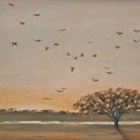 Gulls settling