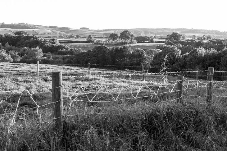 Fields and woodland, Ampleforth, September 2015