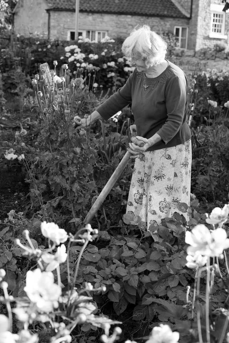 Betty Fox digging potatoes, Ampleforth, August 2015