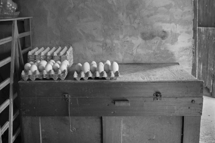 Goose eggs, R. Todd and Son, Ampleforth, March 2015