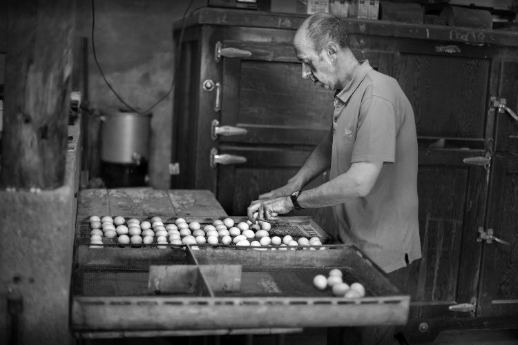 Jeffrey Todd transferring eggs for hatching, April 2015