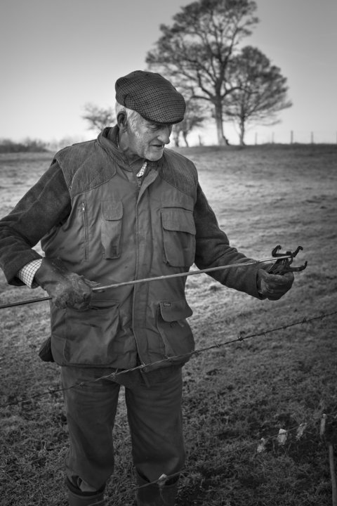 Albert Humphrey setting mole traps, January 2015