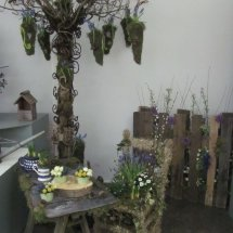 Harrogate flower Show 2015