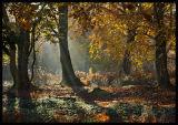 Limpsfield- Autumn