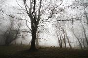 Quantock mist