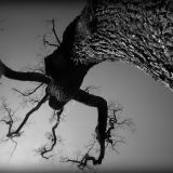 Spooky Old Tree