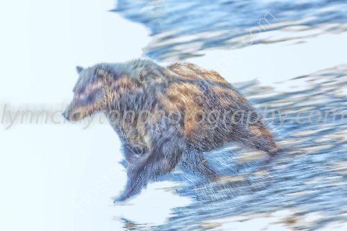 My favourite Bear image...