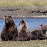Three bears relaxing