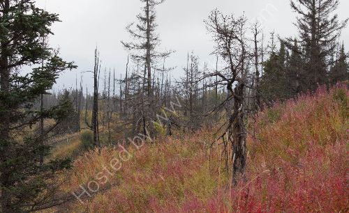 Road near Homer with Fireweed