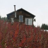 Seldovia with Fireweed