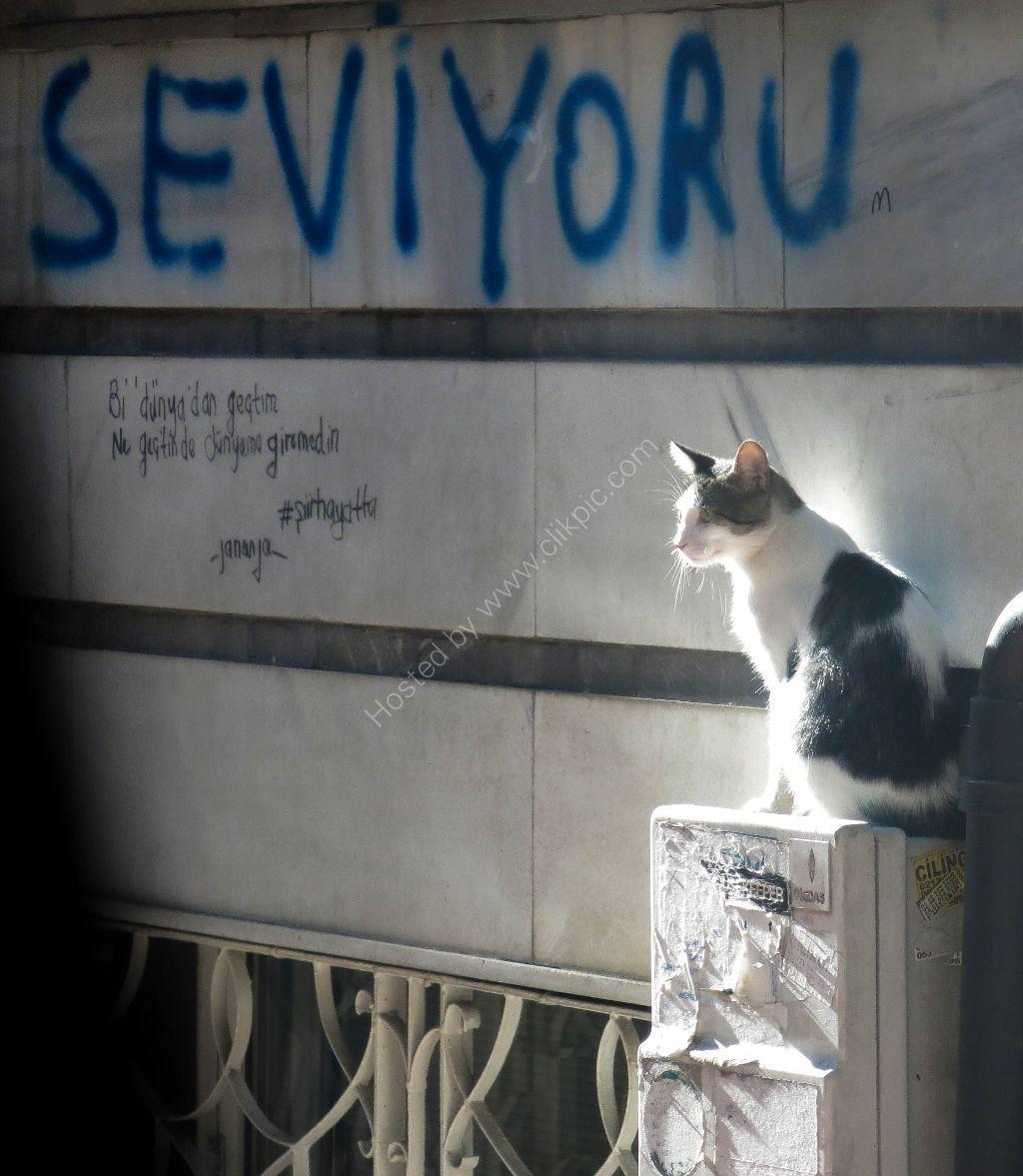 Cat in the sun Istanbul