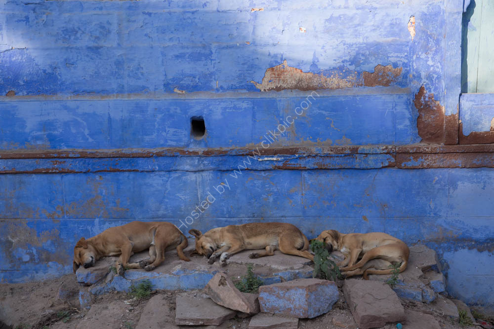 A Dogs life in The Blue City