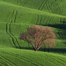 2004 Tuscany 04