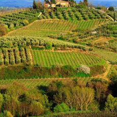 2017 Tuscany 17