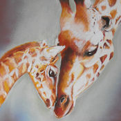 Giraffes - A Mother's Love