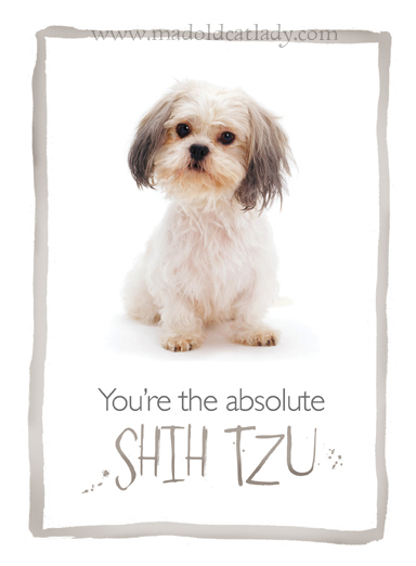 The Absolute Shih Tzu