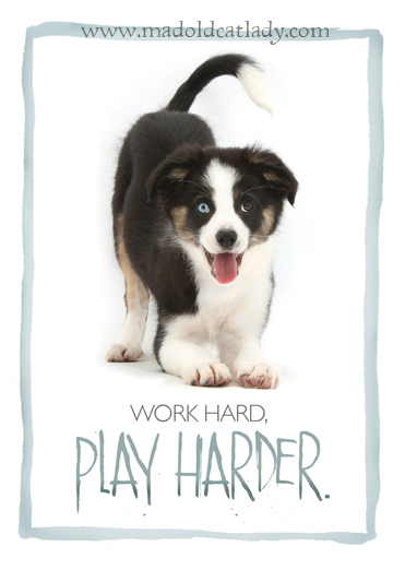 Border Collie: Work Hard Play Harder 5x7 card