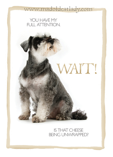 Schnauser greeting card