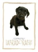 Adorable Labrador