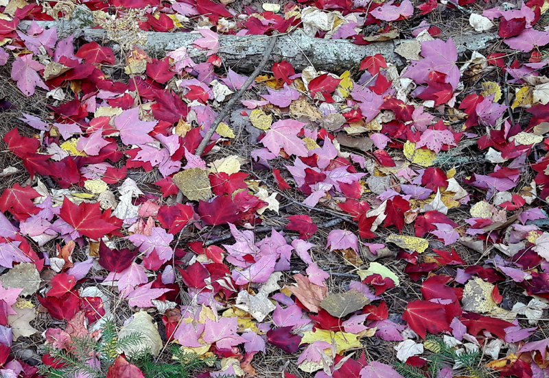 Pretty leaf litter
