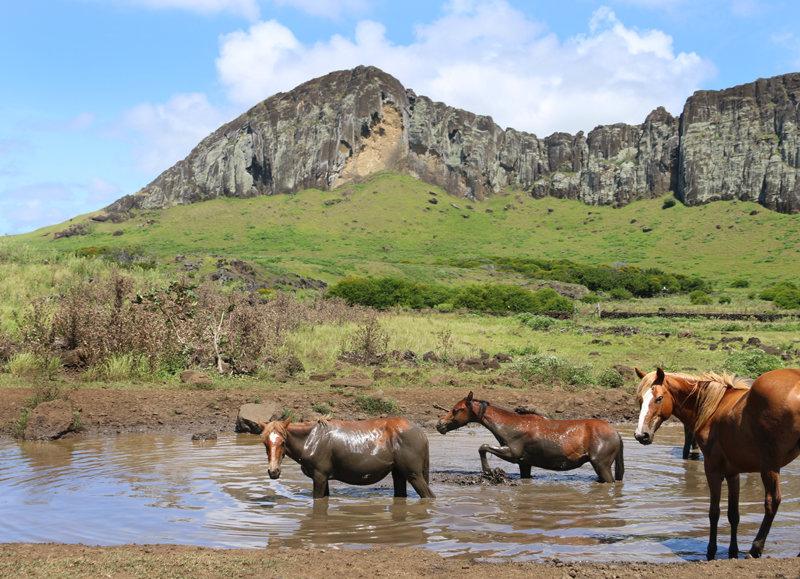 Wild horses take a mud bath