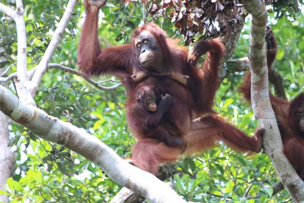 Mother & infant descending