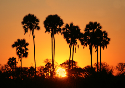Delta palm sunset