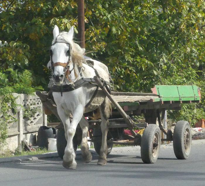 Working horse in Nis, Serbia