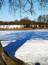 CCP11: Winter Oak