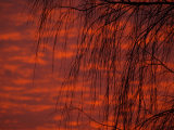 Norwell Sunrise