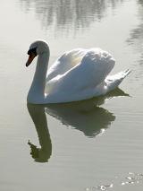Swan, Devizes, Wiltshire