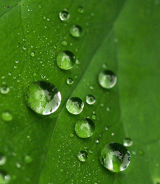 Raindrops Linger