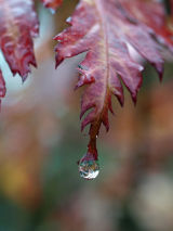 Water Droplet, Leicestershire