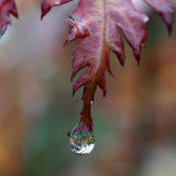 Autumn Jewel 4