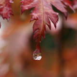 Autumn Jewel 1
