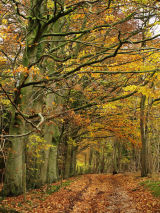 Autumn Strolls