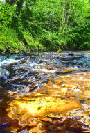 Spring, River Ceiriog