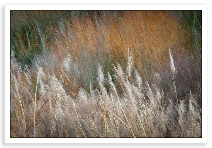 Winter Grasses Abstract