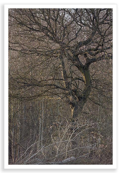 Radley Dark Tree