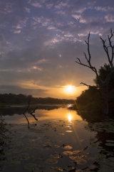 Sunrise Kruger Waterhole