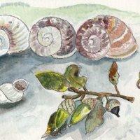 snails, Quarante