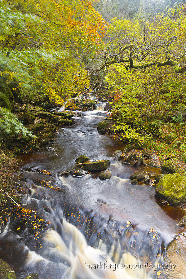 Golspie Gorge in autumn