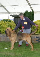 Wistful after winning Group 4 at birmingham Hound Show 2007
